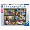 Puzzle Gelini im Bücherregal
